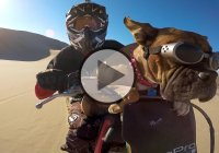 Meet Lexus 'The Dirt Bike Dog' With The Most Badass Goggles Ever!!