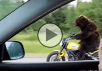 Brutally Funny – Bear Riding Motorcycle on The Highway!
