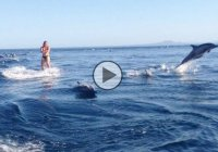 Wakeboarding with dolphins, the experience of a lifetime!!!