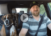 Vaughn Gittin Jr. takes his dog for a rally-style adventure in a Fiesta ST!