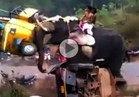 Revengeful elephant damages 27 vehicles in a raging attack!