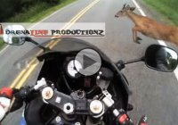 Motorcycle vs deer : Unbelievable bike – control at 85 mph!