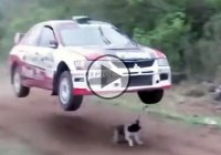 Rally car jumps over a lucky dog to avoid hitting it on the track!