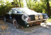 1966 Shelby Mustang – An incredible barn find untouched for decades!